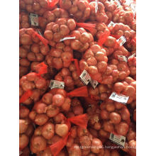 2016 Fresh Shallot (3-5 cm) in 1lb or 40lb Mesh Bag